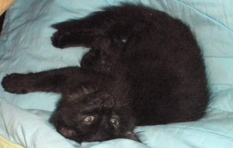 Sasha when she was a wee kitten
